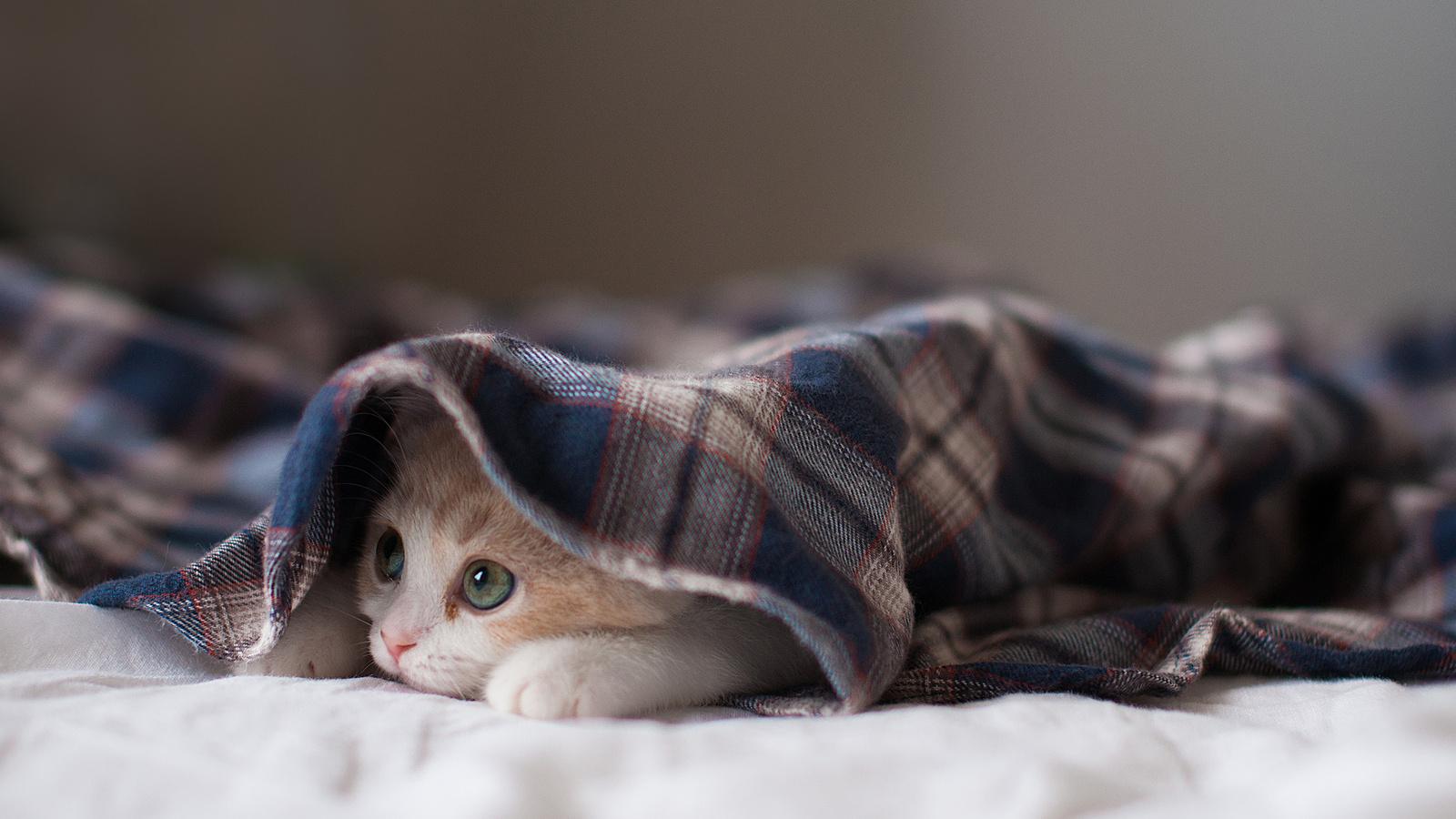 белан картинки выздоравливай скорее котик вращающихся неподвижных частей